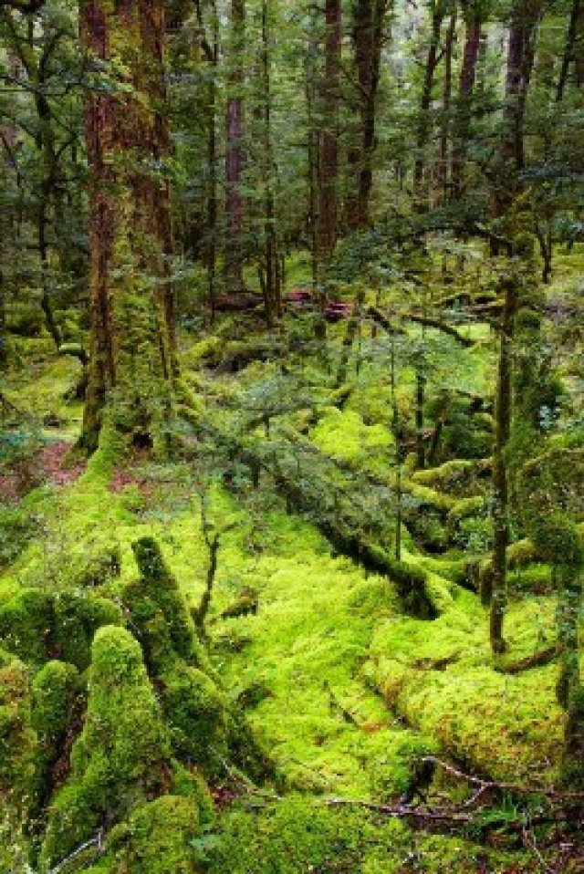 13752710-primeval-forest-new-zealand