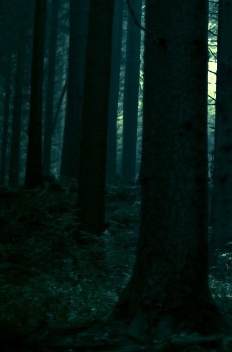 23150_forest_dark_forest