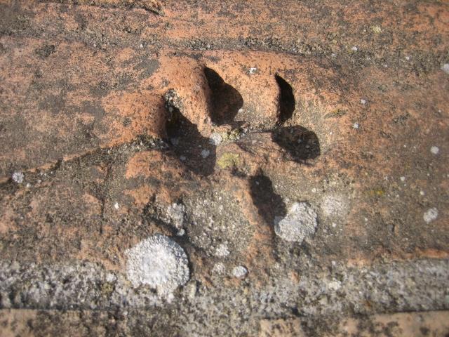 Lasting feline marking in Civita di Bagnoreggio, Italy