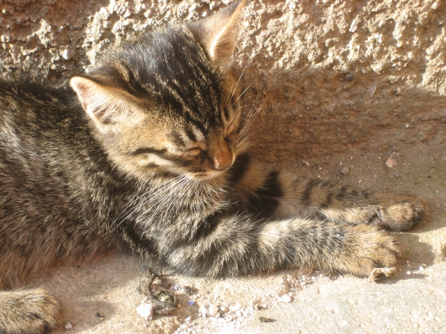 Damn...the little critter is sleeping on the job in Civita di Bagnoreggio