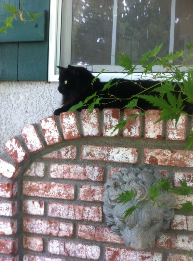 Observant feline Tara