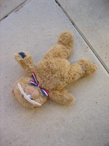 bear dead (1)